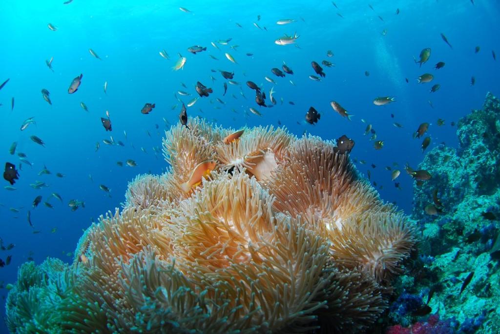 宮古島のサンゴ礁