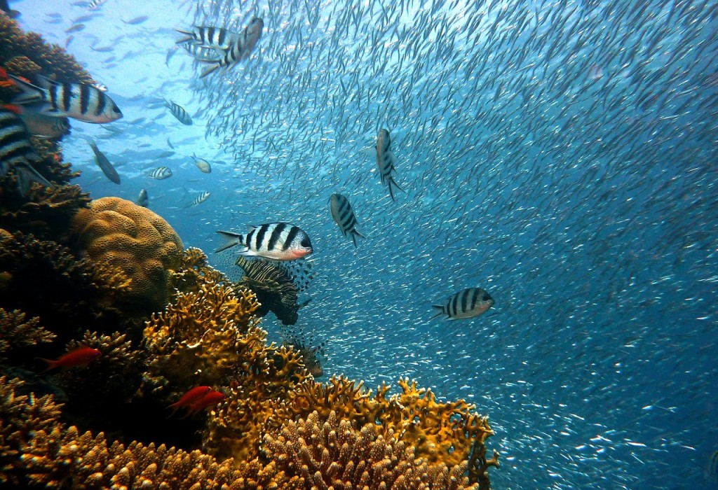 宮古島,キャバクラ,沖縄,ブログ画像,ダイビング,サンゴ礁