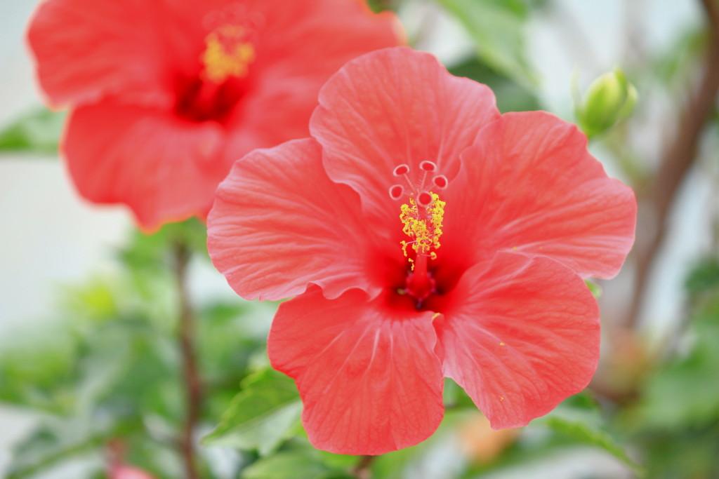 宮古島,キャバクラ,沖縄,観光,ブログ画像,植物,花