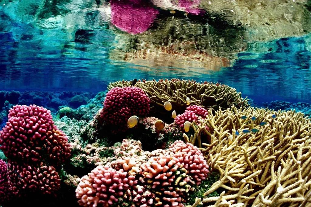 宮古島,キャバクラ,シュノーケリング,サンゴ礁,ブログ画像