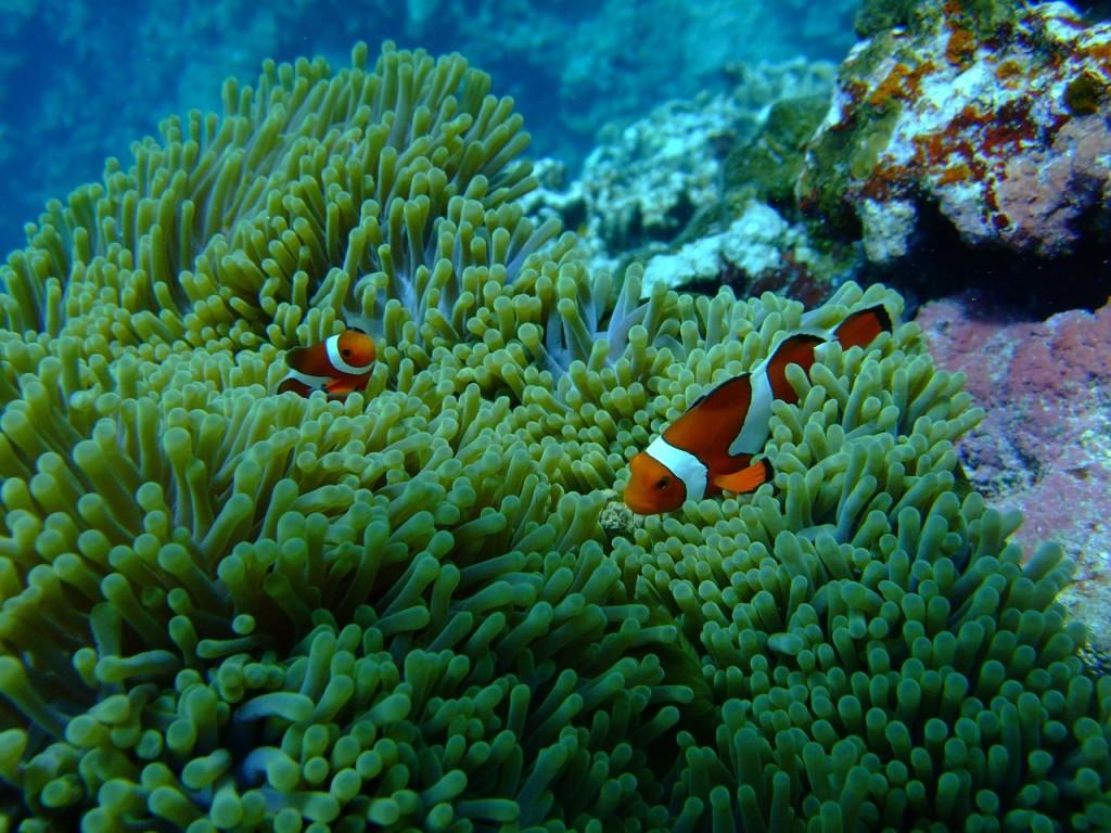 宮古島,キャバクラ,沖縄,ブログ画像,シュノーケリング,サンゴ礁